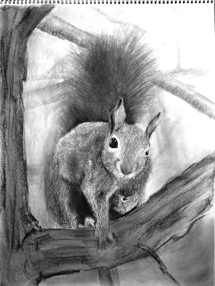 Carmen Martin, Art Things: Sketchbook, Grey squirrel.