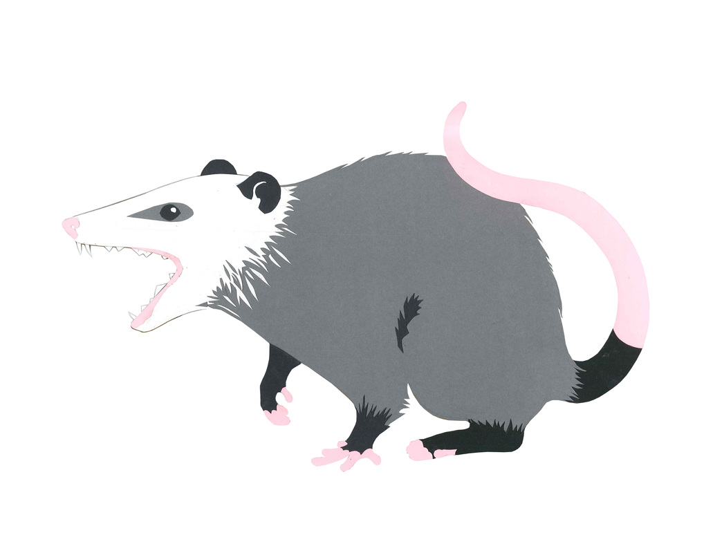 Carmen Martin, Art Things: Sketchbook. Opossum.