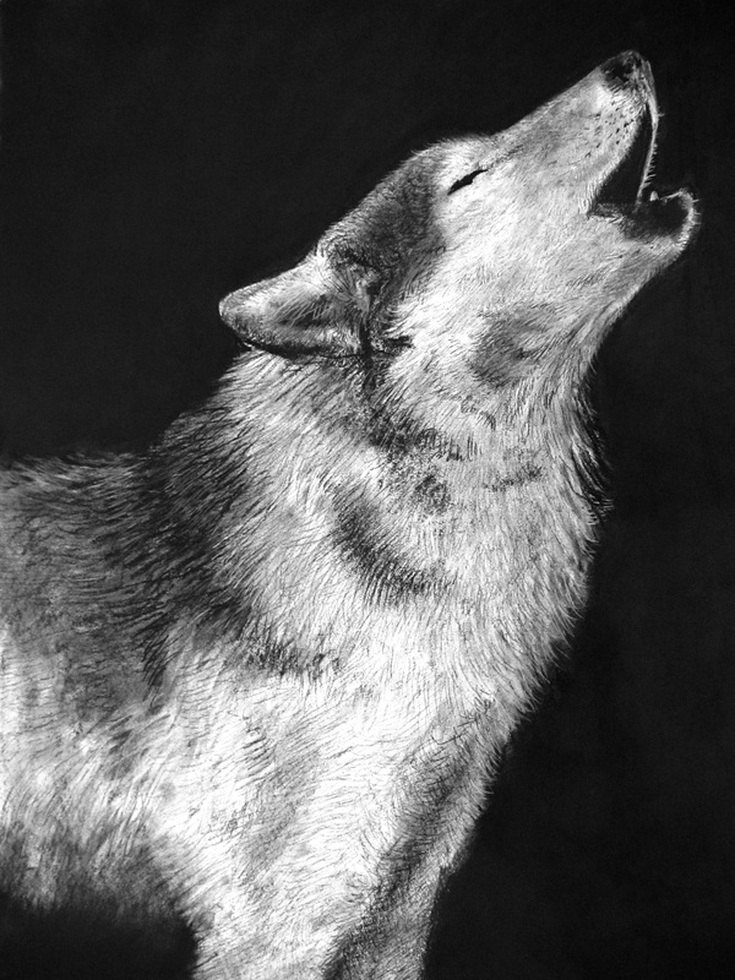 Carmen Martin, Art Things: Sketchbook, Grey wolf.
